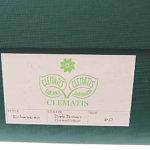 クレマチス|CLEMATIS|ダークブラウンスエードチャッカブーツ|Echinacea|6.0 イメージ010